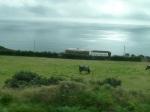 Entre Laxey et Ramwey le 20 août 2012